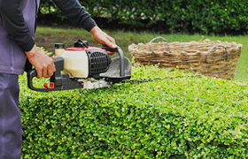 Shrub Trimming Service
